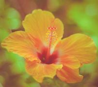 Retro hawaiian hibiscus Stock Photos