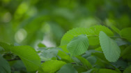 Stock Video Footage of Green Leaves