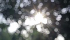 Bokeh blur tree Stock Footage
