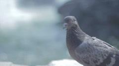 Paloma bird look Stock Footage