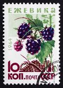 Postage stamp Russia 1964 Blackberries, Bramble, Perennial Plant - stock photo