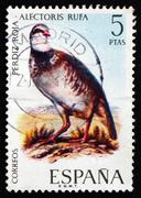 Postage stamp Spain 1971 Red-legged Partridge, Bird - stock photo