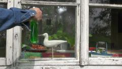 Cleaning  window in farm house Stock Footage