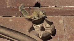 Indian Palm Squirrel sitting on ornamental house wall, India Stock Footage