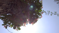 Bright sun on the top of a High-rise Trees at the mid noon Stock Footage