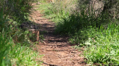 Dirt road path in the woods Stock Footage
