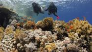 Stock Video Footage of scuba diving couple holding hands swimming over coral reef-25fps