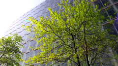 Tree in sunlight against  office building in Hamburg - stock footage