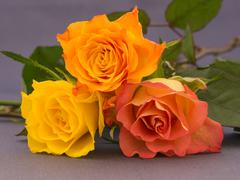 Small bunch of orange and yellow colored roses - stock photo