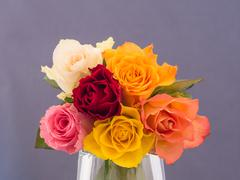 Bunch of multicolored roses Stock Photos