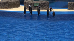 Trained jumping Dolphins Stock Footage