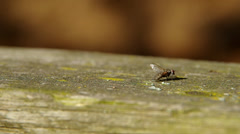 Fly on a wooden board Stock Footage