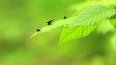 Interesting small flies on the leaves Stock Footage