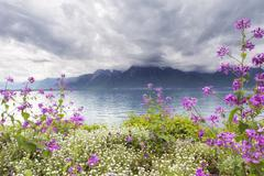 Flowers against mountains, Montreux. Switzerland - stock photo