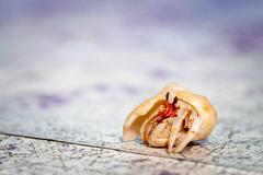 small hermit crab of cinnamon island, maldives - stock photo