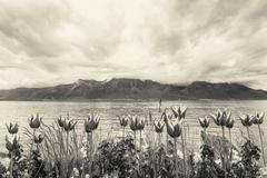 Flowers near lake, Montreux. Switzerland - stock photo