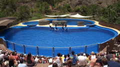 Trained jumping Dolphins in Palmitos Park Stock Footage