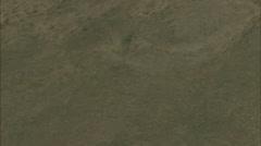Grasslands Prairie Deer Stock Footage