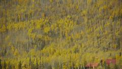 Pan Right Mountain Side Forest, Autumn Colors Stock Footage