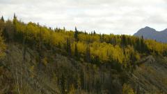 Autumn Trees Atop Bluff Stock Footage