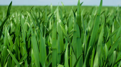 Close up of fresh thick grass Stock Footage