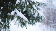 Green needles on fir tree branch Stock Footage