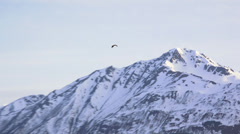 Zoom in tracking shot Bald Eagle Past Mountains Alaska HD Stock Footage