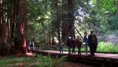 Tourists at the Muir Woods National Monument. San Francisco, California, USA. Stock Footage