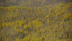 Pan Left Mountain Side Forest, Autumn Colors 3 Stock Footage