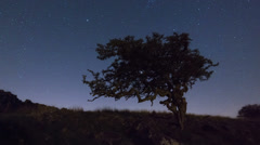 Stock Video Footage of Lone tree astro time lapse