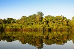 a river and beautiful trees in a rainforest peru - stock photo