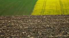 Field of oilseed rape in spring - stock footage