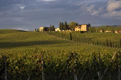 Tuscan hills - stock photo