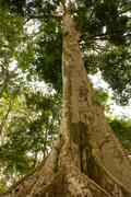 amazon jungle tree - stock photo