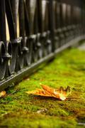 fallen leaf on moss - stock photo