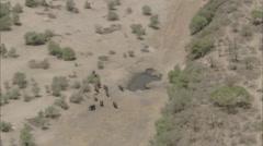 Elephants Desert Sand Arid Humid Stock Footage