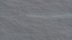 Blue Whale Ocean Mammal Stock Footage