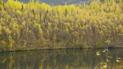 Pan Left Autumn Trees Reflected in Lake Stock Footage