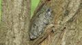 4K Gray Treefrog (Hyla versicolor) and Springtails 2 Footage