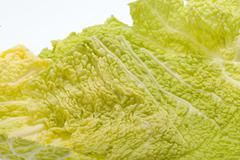 Fresh savoy cabbage leaf as a texture Stock Photos