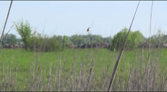 Marsh warbler on reed Stock Footage