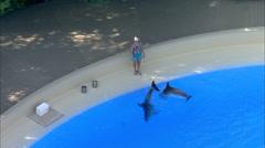 Las Vegas City Pool Dolphins Stock Footage