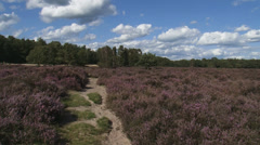 Wind blowing across moraine hills and heathland + pan. Veluwe, The Netherlands Stock Footage
