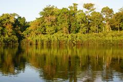 A river and beautiful trees in a rainforest peru Stock Photos