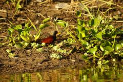 amazon riverbank - stock photo