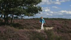 Walker across heathland push moraine complex in the Netherlands. Stock Footage
