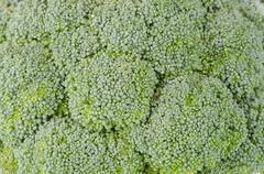 Brocolli background Stock Photos