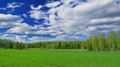 Summer landscape with green field and forest on background, time-lapse. - stock footage