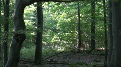 Zoom motion view in forest Stock Footage