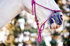 Welsh Pony Detail Stock Photos